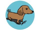 Medium 3c dog